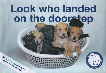 Junk mail from Battersea Dogs and Cats Home.